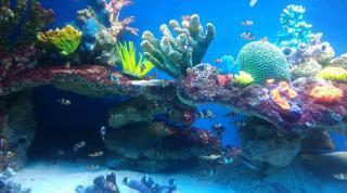 Międzyzdroje Atrakcja Oceanarium Oceanarium Międzyzdroje